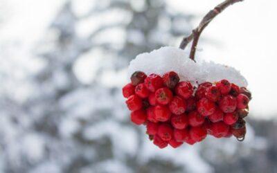 Havi ájurvéda: Január